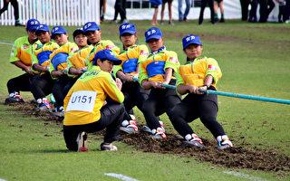 世界杯拔河赛 台湾中华队已夺3面金牌