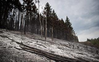 2018年8月23日,在卑詩Fort Fraser附近被Shovel Lake山火燒燬的林地。(加通社)