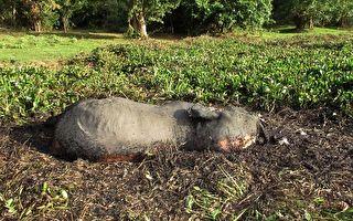 史上最大规模盗猎 非洲87头大象遭拔牙杀害