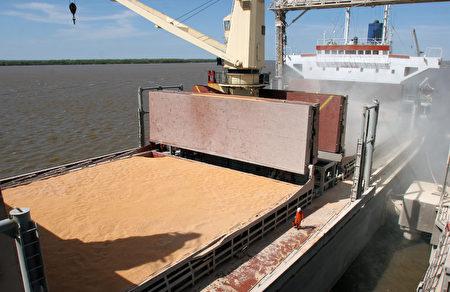 這次台美雙方簽署採購意向書,台灣未來兩年內預計再進口320萬至390萬噸的大豆。圖為大豆示意圖。