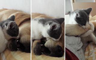 狗狗在睡觉 猫:大啖狗肉的时刻到了