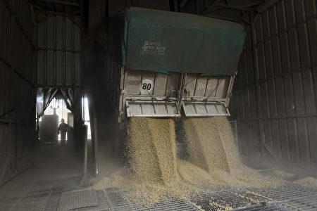 这次台美双方签署采购意向书,台湾未来两年内预计再进口320万至390万吨的大豆。图为大豆示意图。