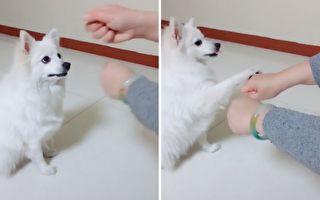 雙手都有食物!狗狗得知吃錯後的反應超搞笑