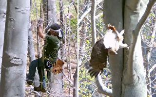 鸟儿困18米高树缝 他们费心助它回家团圆