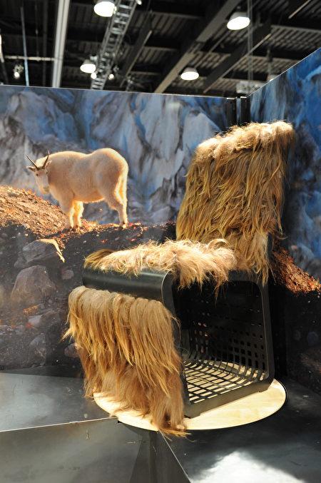 在溫哥華室內設計展IDS上一角,壁畫上的山羊,看到自己的羊毛做成的椅子,會是啥感受?(童宇/大紀元)