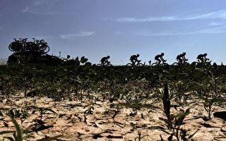 高温减产 荷兰果蔬价格恐大涨