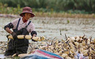 不堪貿易戰 中國經濟增速明年或降至6.1%