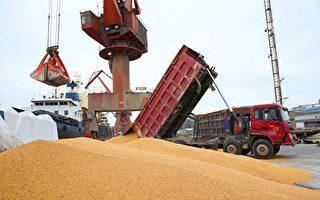 貿易戰下 黑龍江大豆因霜害減產5.5億斤