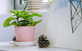 新研究:植物或可预警家居环境异常