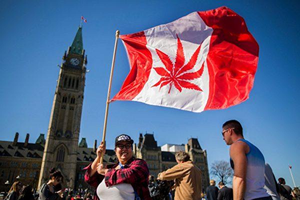 一名加拿大婦女在加拿大議會外揮舞將加拿大國旗圖案上的楓葉修改為大麻葉的旗幟。楓葉國變成大麻葉國?(AFP)
