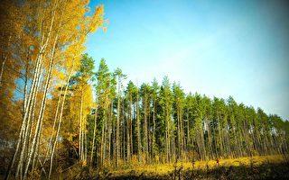 美科學家:改善氣候 樹木「吞雲吐霧」顯奇效