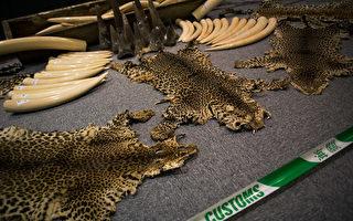 中共将犀牛角和虎骨买卖合法化 遭国际批评