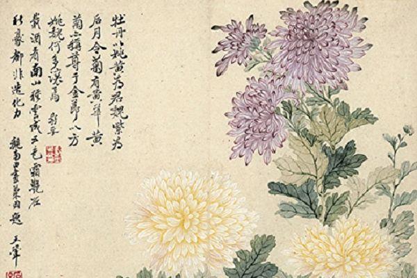 【文史】畫中菊雅俗共賞 四君子菊之美