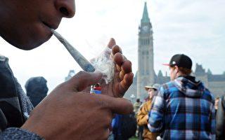 加拿大旅游公司推出大麻游