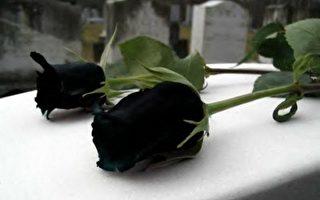 土耳其罕見黑玫瑰 既神秘又悲傷