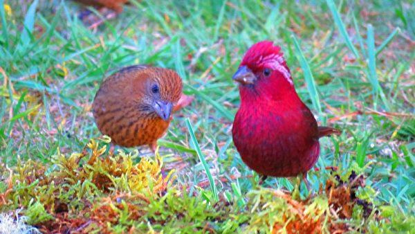 组图:台湾阿里山生态之美 赏鸟与动物共舞