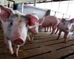 绿豆椪、馅饼等有些看似没有猪肉的食品也潜存该病毒。