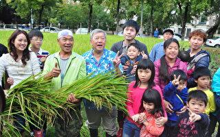 新瓦屋割稻体验及米食飨宴热闹登场