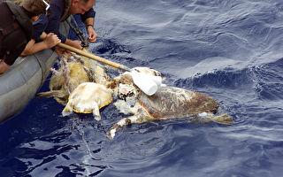 海龜水鳥被海洋垃圾綑一團!漁民拯救了牠們