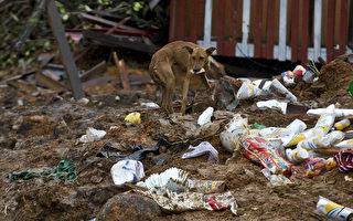 墨西哥男子走遍全国 5年救400多只流浪狗