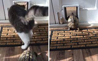 乌龟以行动向猫咪宣告:想甩下我可没那么容易