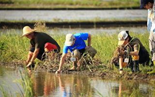 羅東處里山出任務  跟農夫實踐「水田就是棲地」