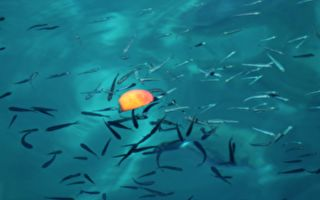 魚能「起死回生」大翻魚肚放回水中馬上游走