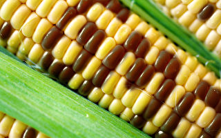 盘点常见8种转基因食品 如何避免?