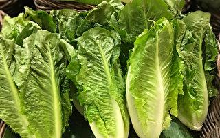 已有18人染病 加衛生局警告勿食羅馬生菜