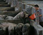 中共处理新冠疫情和非洲猪瘟惊人相似