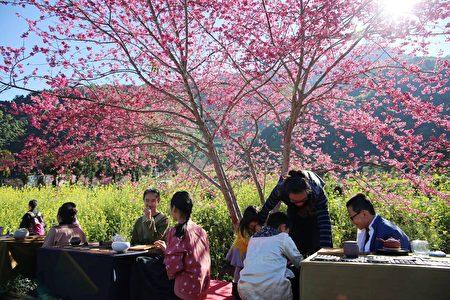"""赏樱也是""""2018南投花卉嘉年华""""的主要活动之一。"""