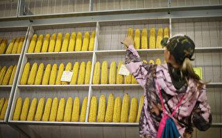继大豆及汽车后 传北京明年采购美国玉米