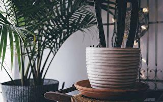 室内绿色植物提高空气质量