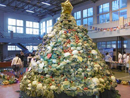 1000颗高丽菜堆成4公尺高的圣诞树。
