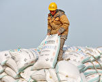 面對中國經濟下行,北京當局計劃恢復購買美國大豆以緩解中美貿易戰。然而,2019年1月最新數據顯示,中國的大豆進口量同比大幅下挫近四成,主要原因是非洲豬瘟攪局,打亂了中共的如意算盤。