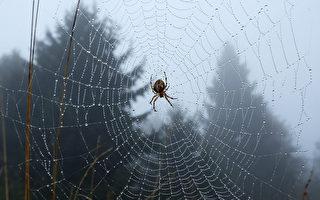 """巴西下""""蜘蛛雨"""" 天空中黑点密布"""