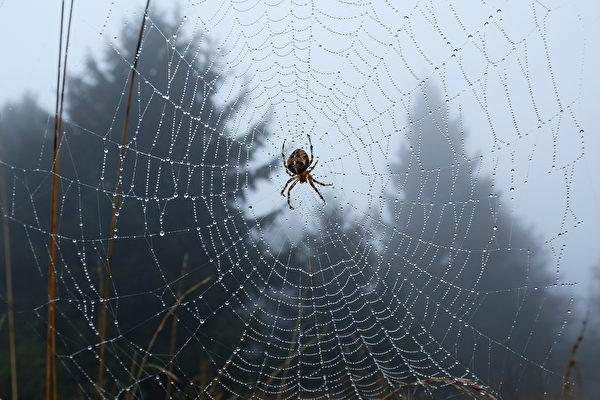 巴西下「蜘蛛雨」 天空中黑點密布