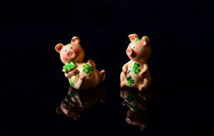 """为何说""""火到猪头烂""""? 亥年说猪谚语"""