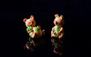 """为何说""""猪来起大厝""""? 亥年说猪谚语"""