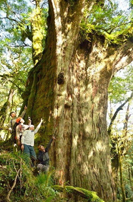 公布原始桧木林遭批 台林务局:公开才是保护