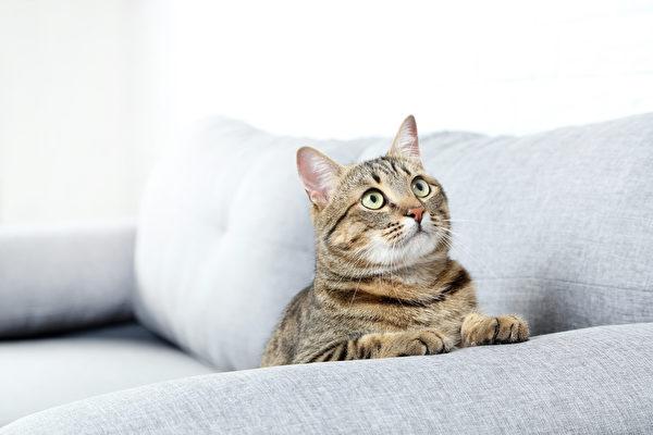 每月花 1500 美元 美國男子租公寓給兩隻貓住