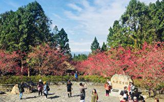 台湾4大赏樱秘境 被日本樱花协会认证