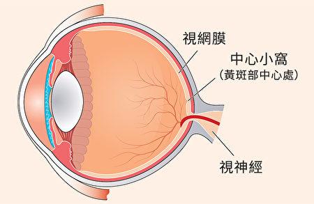 不同護眼營養素作用於眼睛的不同部位。