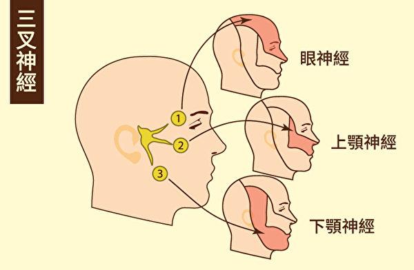 三叉神经是脑部的第五对脑神经,分成眼神经、上颚神经和下颚神经三条。