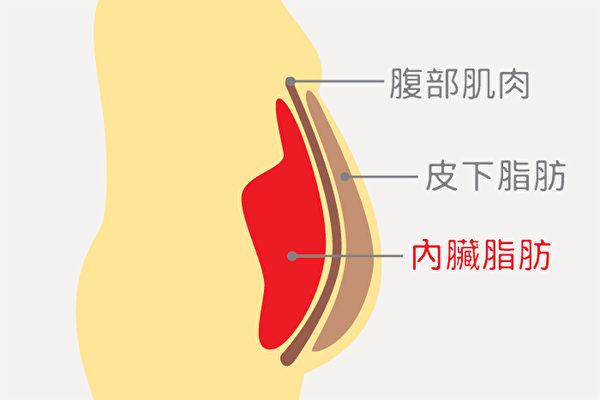 """肠的周围累积许多脂肪,这种脂肪称为""""内脏脂肪""""。可以用手指捏出一块脂肪的称""""皮下脂肪"""""""