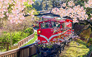 全台走「春」放風趣  高人氣景點特搜