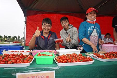 現場免費試吃皮薄多汁甜度高的玉女小番茄!