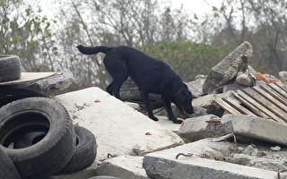 搜救犬國際評測 蓄積重大災害搜救能量