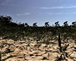 又是乾旱年?荷蘭今春降水嚴重不足