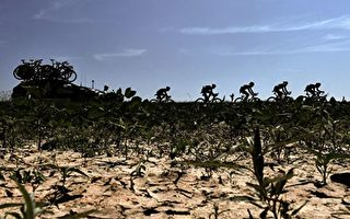 又是干旱年?荷兰今春降水严重不足